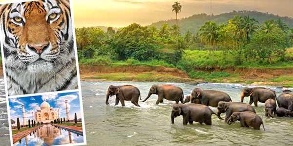 Reseföredrag: Maldiverna, Sri Lanka och Indien